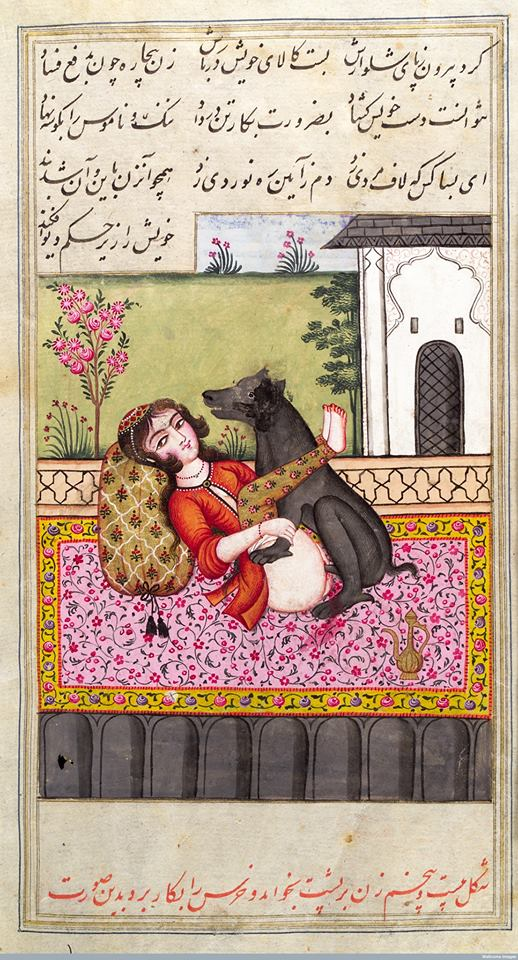 Miniature painting showing a Persian woman copulating with an animal